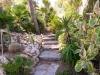 Gummibaum im Garten ohne Swimmingpool.jpg